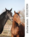 two adorable horses nuzzling... | Shutterstock . vector #150119054