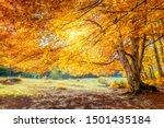 Real Autumn Landscape   Big...