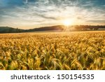 Stock photo rural scene of sun setting over the barley field 150154535