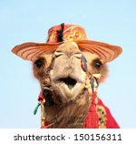 funny portrait of camel with... | Shutterstock . vector #150156311