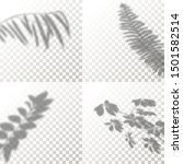set of shadow overlay plant... | Shutterstock .eps vector #1501582514
