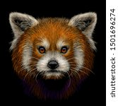 Red Panda. Graphic  Color  Hand ...