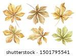 chestnuts.autumn leaves set... | Shutterstock . vector #1501795541