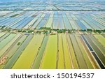 aerial view of rice field...   Shutterstock . vector #150194537