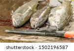 watercolor illustration: Fishing of the pond in Roetgesbuettel,trouts (Salmo trutta) before slaughtering for sale