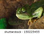 green cameleon  | Shutterstock . vector #150225455