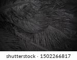 Black Feathers Abstract...