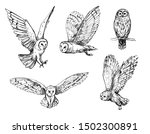 owl sketch. hand drawn... | Shutterstock .eps vector #1502300891