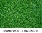 Green grass pattern and texture ...