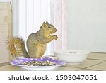 Fox Squirrel Is Eating...