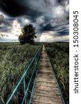 a pier going through in reeds   Shutterstock . vector #150308045