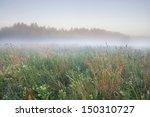 Foggy Morning Meadow. Landscape