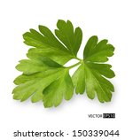 parsley herb isolated on white... | Shutterstock .eps vector #150339044