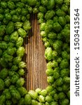 Small photo of Green cones of hops on a rustic aged wooden table with copy space. Brewery concept background. Hop cones formed as a shape of beer bottle.