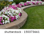 Pink And White Petunias On The...