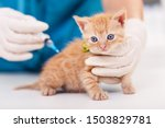 Stock photo cute kitten getting a vaccine at the veterinary held on the examination table by the animal 1503829781