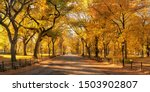 Central Park In Autumn With...