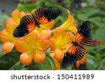 Tropical Rhododendron Simbu...