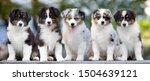 Group Of Puppies Australian...