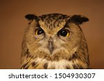 Small photo of Funny suspicious-evil look. Portrait of female wild eagle owl (bubo bubo) with spiteful eyes. Raptor bird. Face of Eurasian eagle owl, eagle-owl