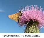 Butterfly On A Thistle With...
