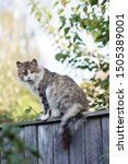 Stock photo young gray and white cat sitting on the fence 1505389001