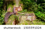 Cute Squirrel In The Forest ...