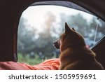Single Resting Dog In Campsite...