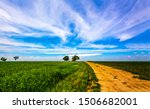 Summer field road landscape. Rural road in summer. Country road horizon landscape. Summer rural road view