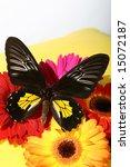 butterfly | Shutterstock . vector #15072187