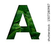 Small photo of Leafs font A made of Real alive leafs with Precious paper cut shape of font. Leafs font.