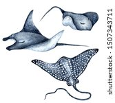 Spotted Eagle Ray  Stingray ...