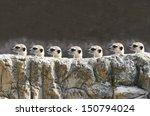 Stock photo meerkets 150794024