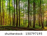Bavarian Summer Forest....