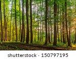 Bavarian Summer Forest....