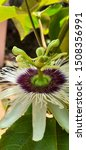 Passion Flowers Produce...
