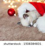 Stock photo kitten sleep in christmas hat little cat sleep on sofa near christmas light 1508384831
