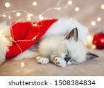 Stock photo kitten sleep in christmas hat little cat sleep on sofa near christmas light 1508384834