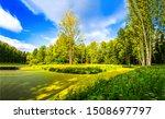 Green swamp duckweed in sunny...