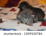 Stock photo grey tabby kitten lying on baby blanket 1509520784