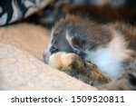 Stock photo mother cat grooming her newborn kitten 1509520811