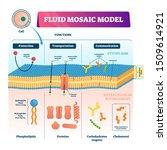 fluid mosaic model vector... | Shutterstock .eps vector #1509614921