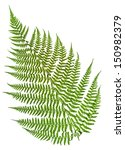 one sprig of fern isolated on... | Shutterstock . vector #150982379