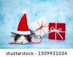 Stock photo the kitten in the hat of santa claus lies on gift boxes festive concept of the new year blue 1509931034