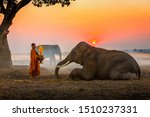 Elephant Made Merit A Monk\'s...
