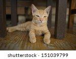 a cat | Shutterstock . vector #151039799