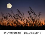 The Harvest Moon And Japanese...