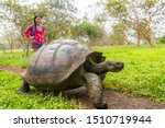 Galapagos Giant Tortoise And...