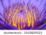 Close Up Photos Of Lotus...