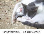 Stock photo little kitten hugging eachother and sleeping in a cute pose sweet and funny pets and animals 1510983914
